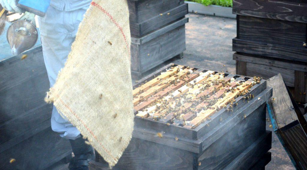 ミツバチの巣登場