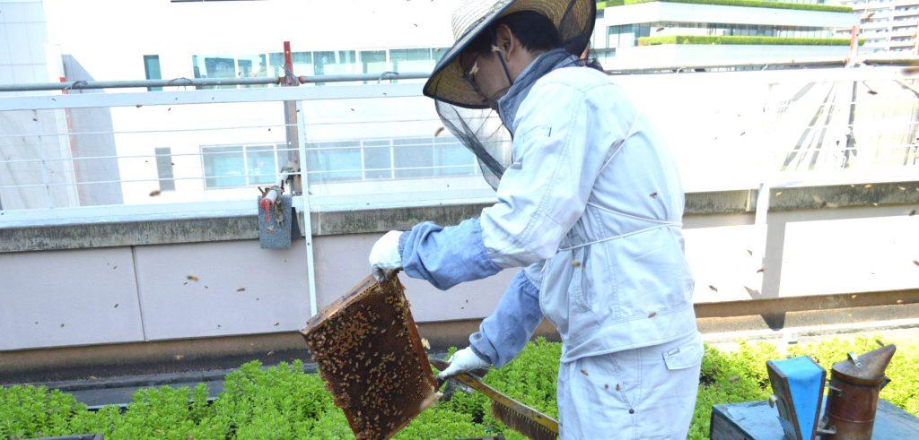 びっちりミツバチが
