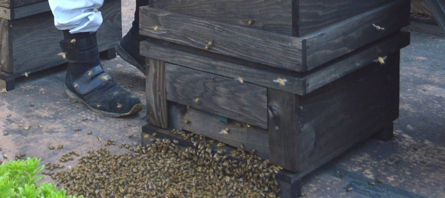 びっちりミツバチの山