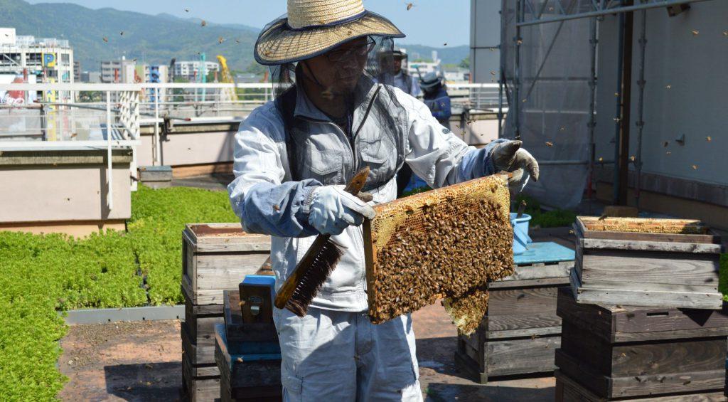 みっちりミツバチ