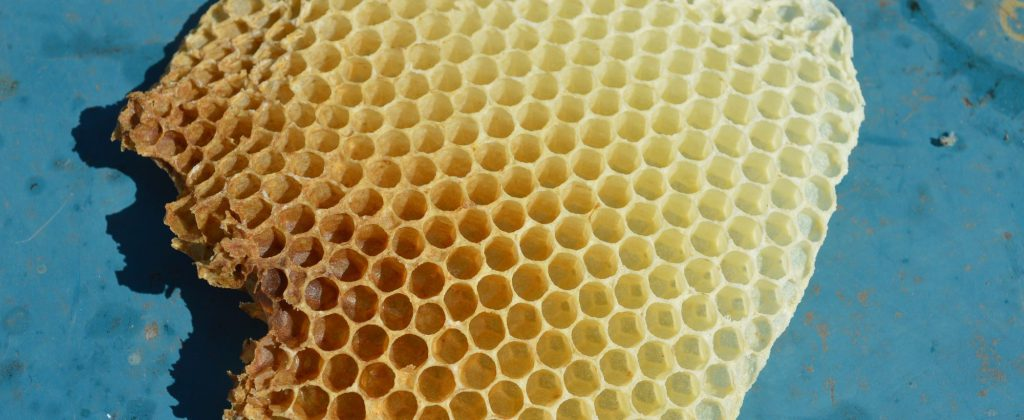 板から飛び出したミツバチの巣