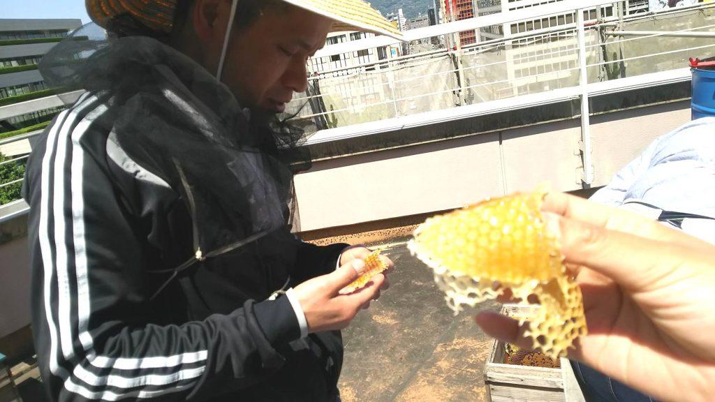 削ぎ取ったふたにも蜜がたっぷり